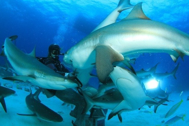 Diving in Bahamas, Nassau - By Michael Lewis