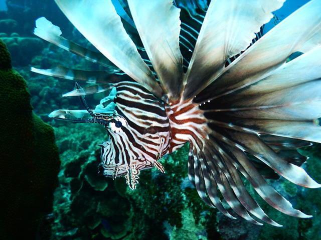 Diving in Willemstad, Curaçao - By Paul Bakker